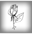 rose flower by hand vector image vector image