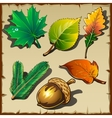 Set of leaves from different trees six icons