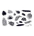 set tropical plant leaf silhouettes vector image