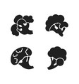 broccoli icon set simple style vector image