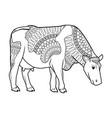 holstein cow standing farm bovine image vector image