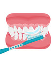 jaw with teeth and toothbrush icon flat style vector image vector image