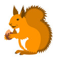 cute smiling red squirrel with nut cartoon vector image vector image