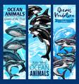 shark and whale sea predatory animal banner set vector image