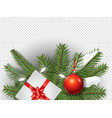 christmas decorations evergreen pine branches vector image