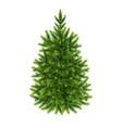 fluffy green fir-tree vector image vector image