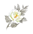 Hand drawing flower isolated on white background vector image vector image