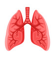 human healthy lungs icon vector image