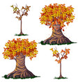 set fantasy of deciduous trees in the fall vector image