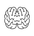 top view human brain vector image