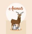 cute animals card cartoon vector image