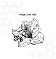 pollination process hand drawn sketch vector image