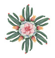 watercolor round mandala of cacti and vector image