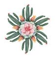 watercolor round mandala of cacti vector image