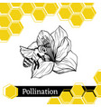 bee pollinating flower sketch style vector image