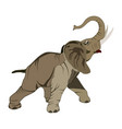 flat of asian elephant vector image