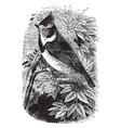 crested tit vintage vector image vector image
