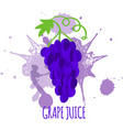 grapes juice package design vector image