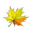maple leaf autumnal symbol isolated icon vector image vector image