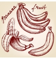 Bananas fruit set hand drawn llustration vector image vector image