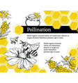 bee pollination flower hand drawn vector image