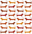 dachshund pattern template vector image vector image