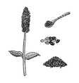 hand drawn set of chia plant spoon and seeds vector image