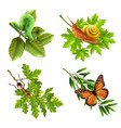insects realistic icons vector image vector image