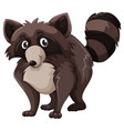 raccoon with brown fur vector image vector image