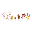 autumn watercolor hand drawn seasonal elements vector image