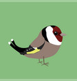 cute goldfinch vector image vector image
