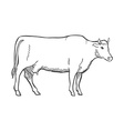 Hand Draw Cow Outline vector image vector image