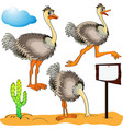 Ostrich Cartoon
