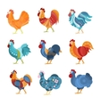 Rooster Similar Drawings Set Colored In Different vector image vector image