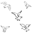 Seagulls sketch Pencil drawing by hand vector image vector image
