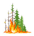 forest fire poster vector image