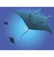 three sea stingrays vector image vector image