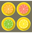 Citrus fruit icons set vector image