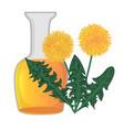 dandelion essential oil vector image vector image