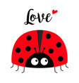 red lady bug ladybird icon love greeting card vector image