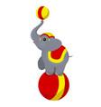 circus elephant on the ball vector image