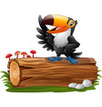 cartoon funny toucan vector image vector image