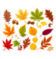 colorful autumn fall leaves and berries vector image vector image