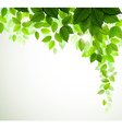 green leaves vector image vector image