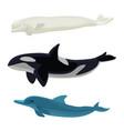 set dolphin killer whales and orca aquatic vector image