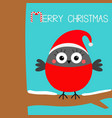 merry christmas bullfinch winter red feather bird vector image vector image