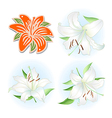 Orange white lilies set vector image vector image