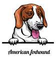 head american foxhound - dog breed color image vector image vector image