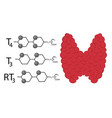 structural chemical formulas of thyroid hormones vector image