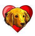 dog with heart icon favorite pet adopt animal vector image vector image